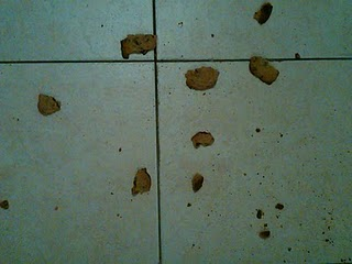 Broken Cookies on Floor